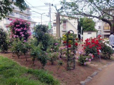 行徳駅前公園の隅っこあたりのバラ園
